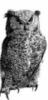 owlcroft logo